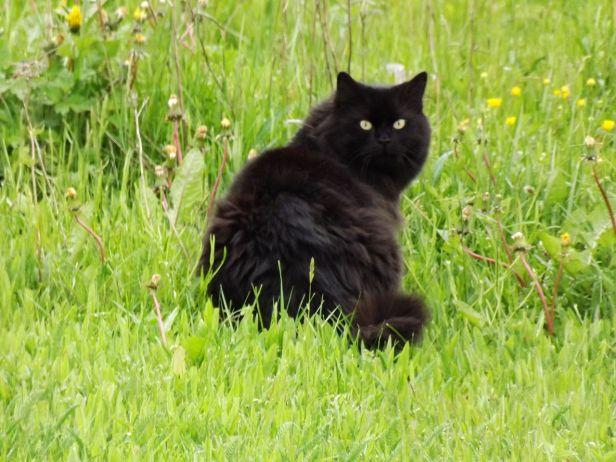 1280px-black_pussy_-_panoramio