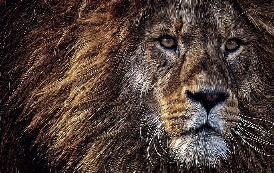 Cette image a un attribut alt vide; le nom du fichier est lion-5829313_960_720.jpg